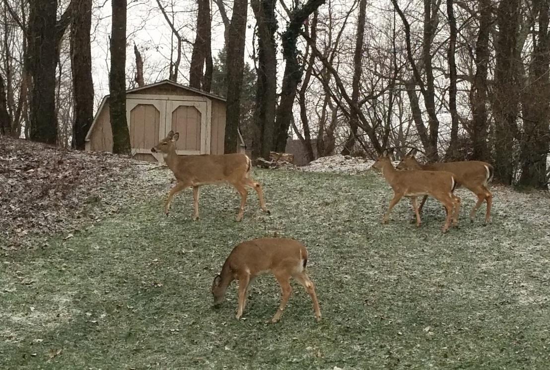 nos-nouvelles-voisines