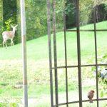 Dans mon jardin: les animaux typiques de Pennsylvanie