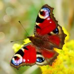 Vous pensez que vous êtes bordélique? Vous êtes peut-être un papillon!